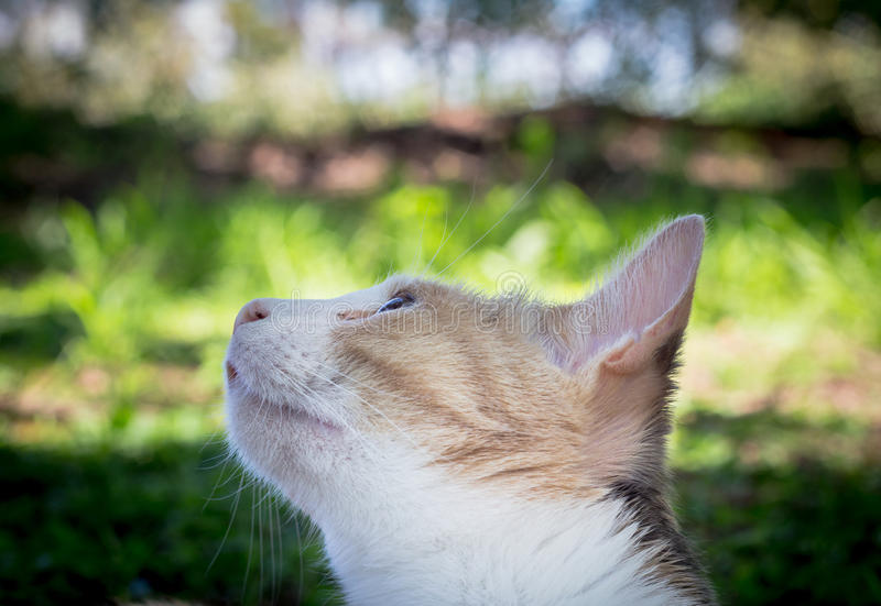 Ciérrese para arriba del gato de calicó hermoso que mira para arriba un pájaro en el ou del árbol imagen de archivo