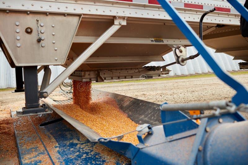 Ciérrese para arriba del grano de cereal que vierte de tolva fotografía de archivo libre de regalías