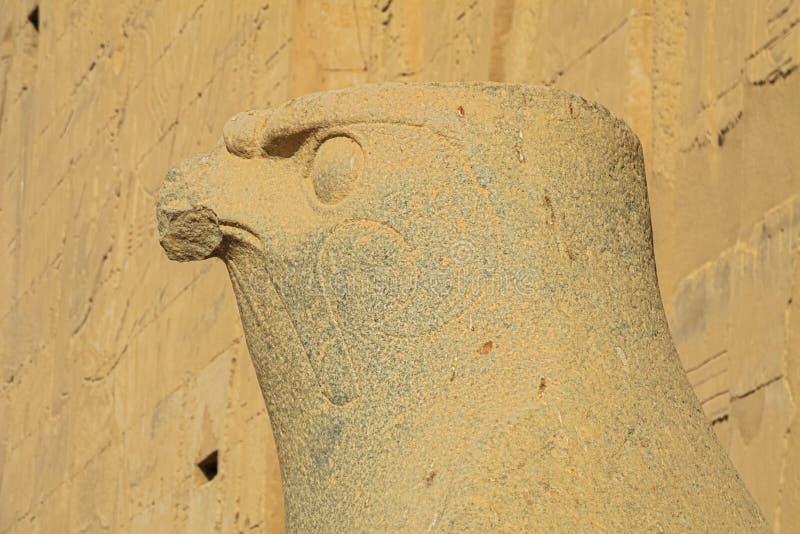 Ciérrese para arriba del jefe del halcón de Horus imágenes de archivo libres de regalías