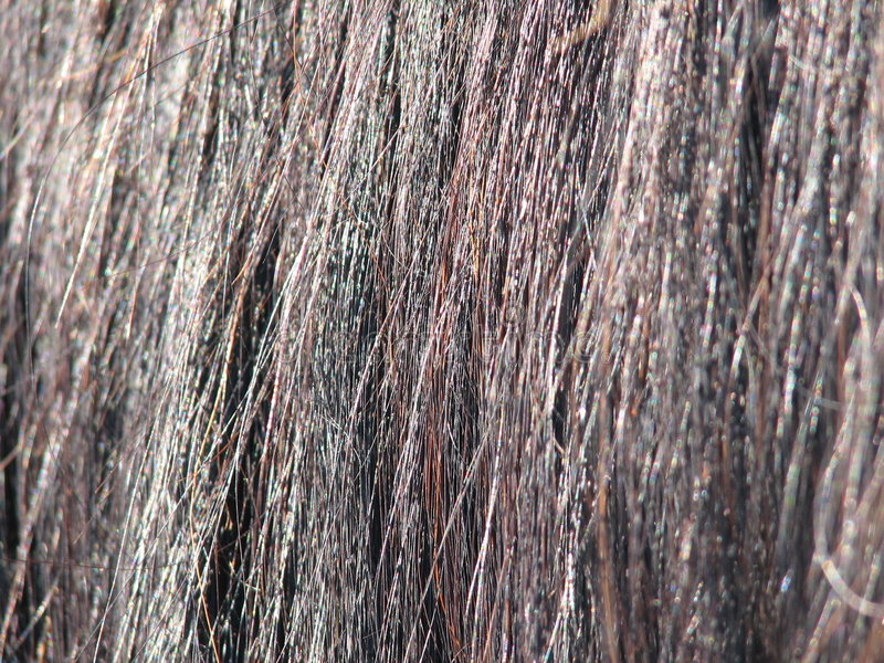 Ciérrese para arriba del pelo del caballo fotografía de archivo libre de regalías