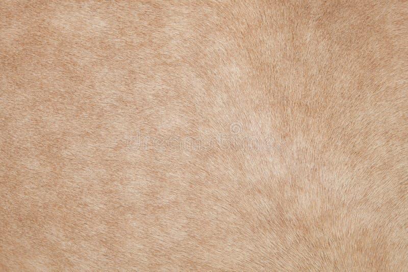 Ciérrese para arriba del pelo del caballo, de la piel, de la piel, del uso del cuero como animales y de nacional fotografía de archivo libre de regalías
