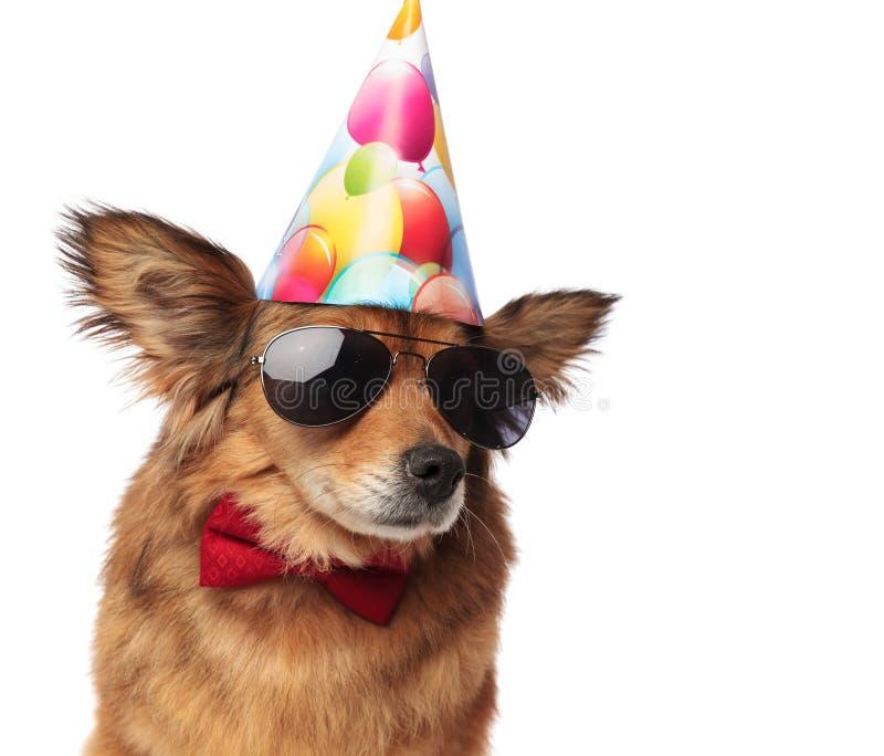 Ciérrese para arriba del perro con clase fresco listo para la fiesta de cumpleaños imagenes de archivo