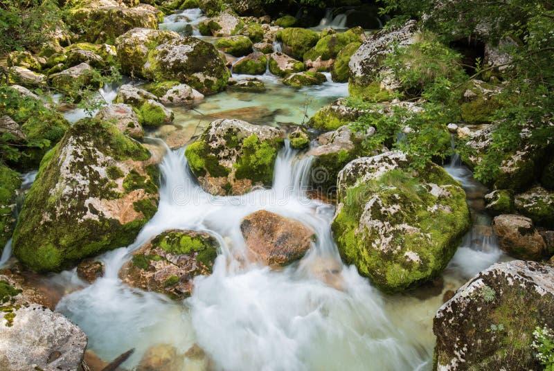 Ciérrese para arriba del río Lepenjica en el corazón del valle de Lepena, Eslovenia fotografía de archivo