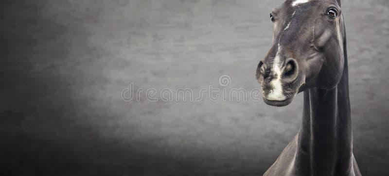 Ciérrese para arriba del retrato negro del caballo en fondo texturizado oscuridad imagen de archivo