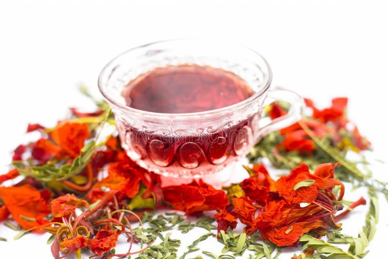 Ciérrese para arriba del té coloreado anaranjado o rojo las flores del árbol de Gular o de llama aisladas en blanco foto de archivo libre de regalías
