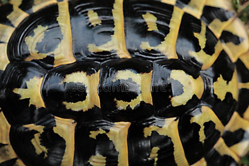 Ciérrese para arriba en cáscara del ` s de la tortuga fotos de archivo libres de regalías