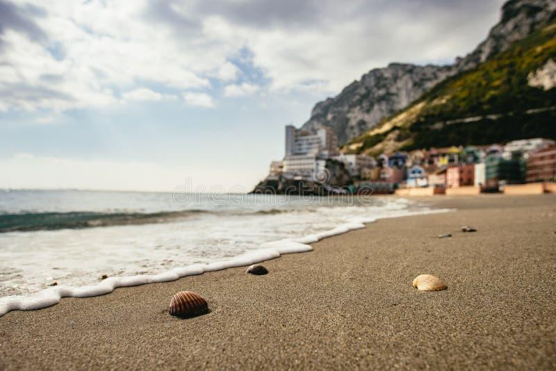 Ciérrese para arriba en cáscaras minúsculas encima de la arena iluminada por el sol de la playa imagen de archivo