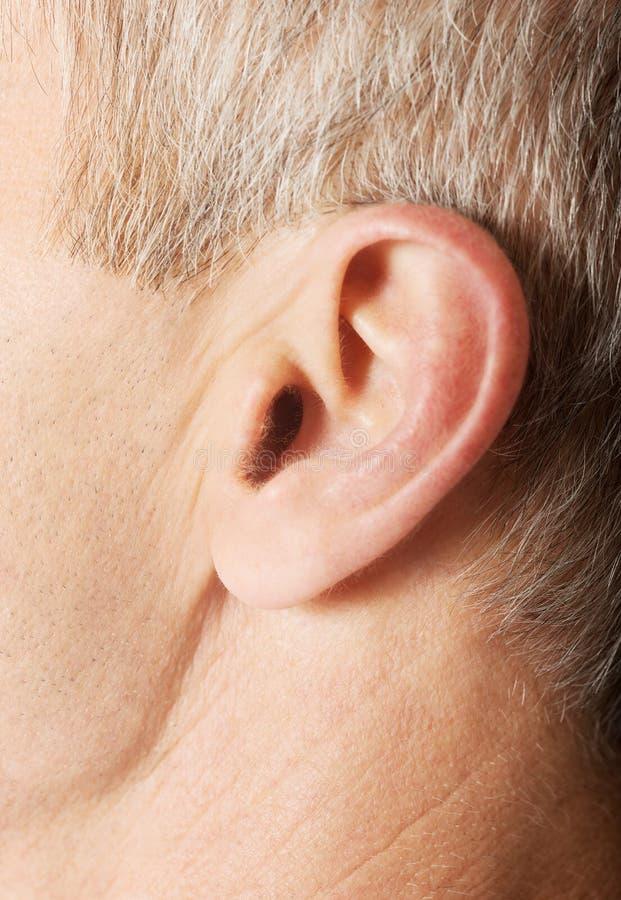 Ciérrese para arriba en el oído masculino fotos de archivo