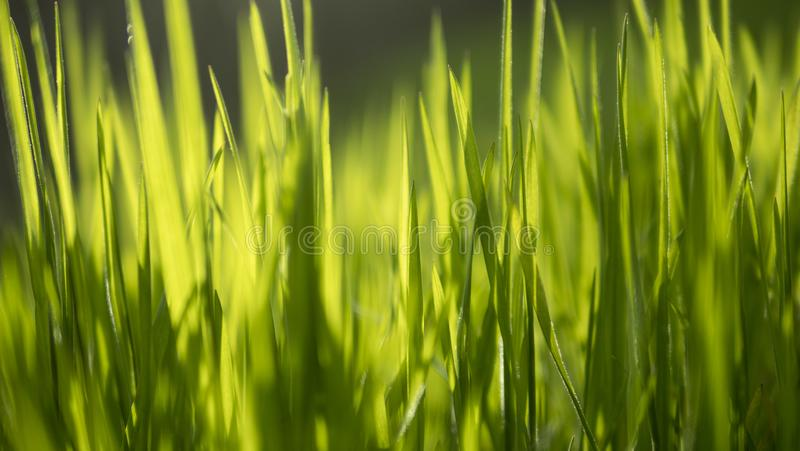 Ciérrese para arriba en hierba borrosa con la luz del sol que alcanza a través foto de archivo