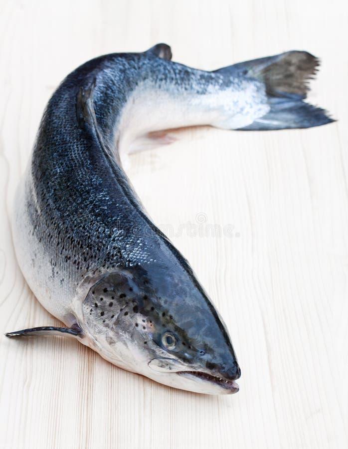 Ciérrese para arriba en un salmón crudo entero en fondo de madera fotografía de archivo