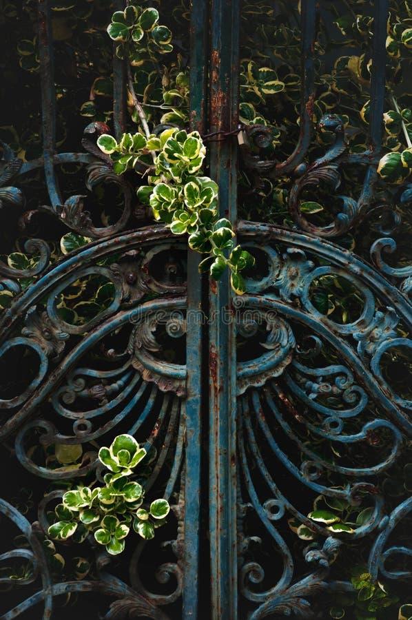 Ciérrese para arriba puerta del hierro del ornamento del vintage de la vieja imagen de archivo libre de regalías