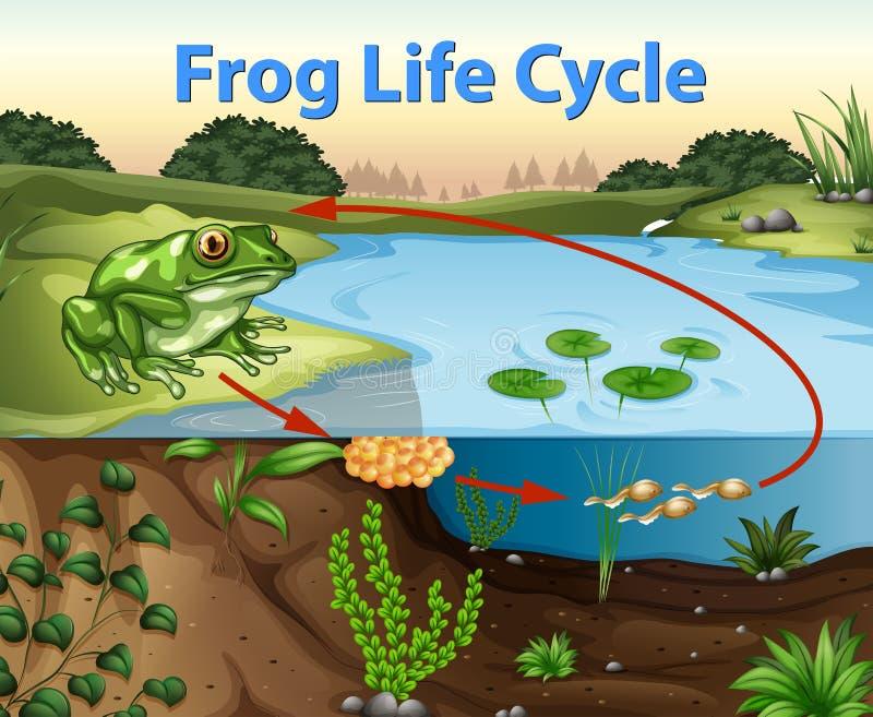 Ciência do ciclo de vida da rã ilustração stock