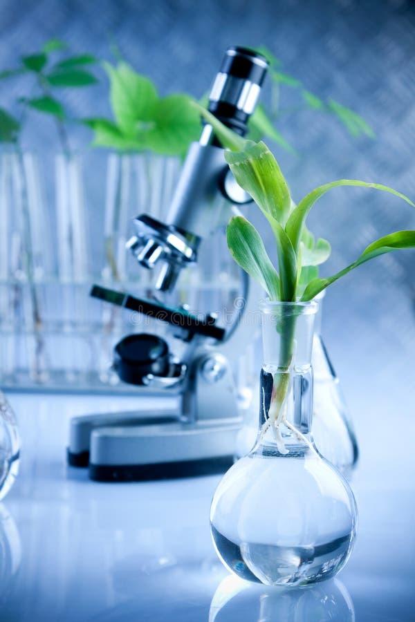 Ciência floral imagens de stock