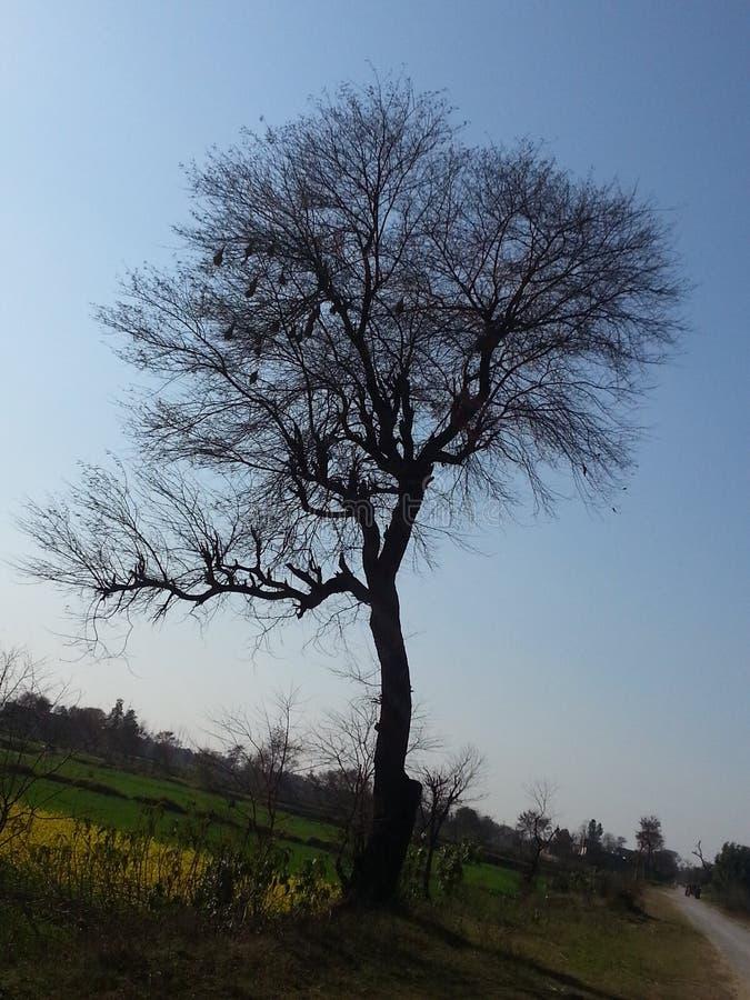 Ciò è bei campi del Pakistan fotografia stock libera da diritti