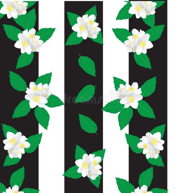 Ciò è fiori bianchi stupefacenti di un gelsomino con le foglie verdi royalty illustrazione gratis