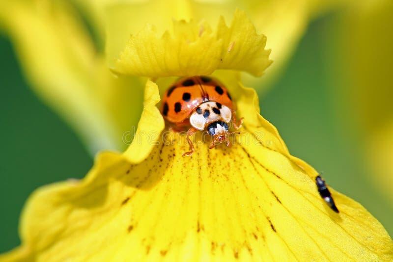 Ciò è il mio fiore fotografia stock libera da diritti