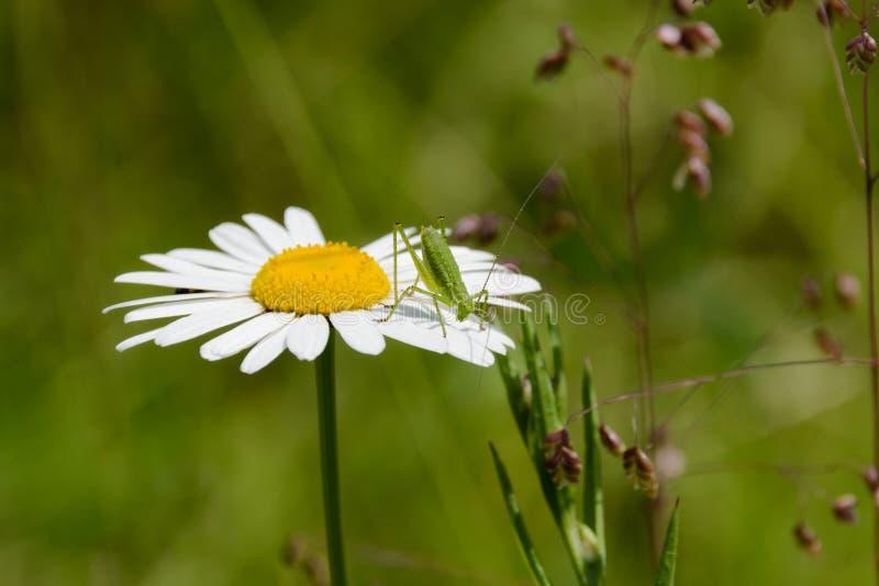 Ciò è il mio fiore fotografie stock