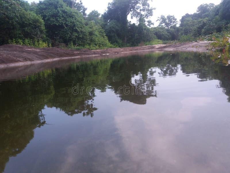 Ciò è l'acqua con la giungla immagine stock