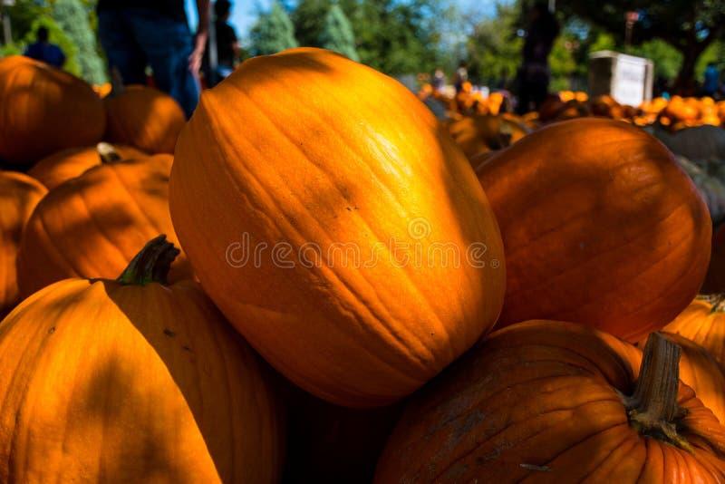 Ciò è la zucca perfetta di Halloween per la scultura in un Jackolatern fotografia stock libera da diritti
