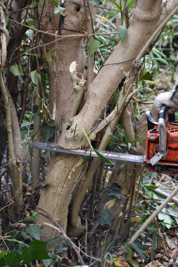 Ciąć drzewa zdjęcia royalty free
