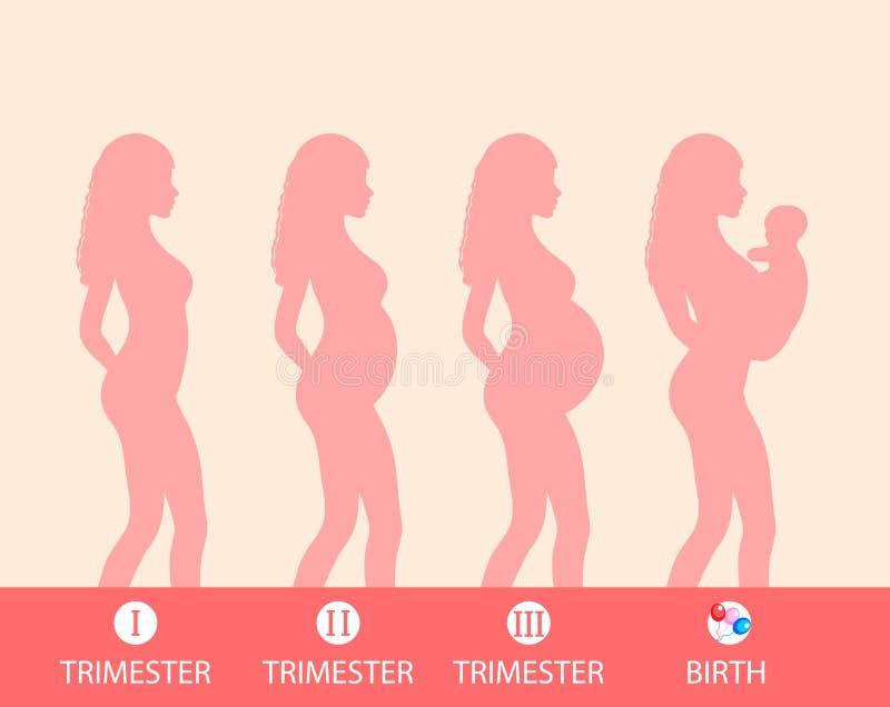 Ciążowa sylwetka, scena brzemienność, trymestry, poród również zwrócić corel ilustracji wektora ilustracja wektor