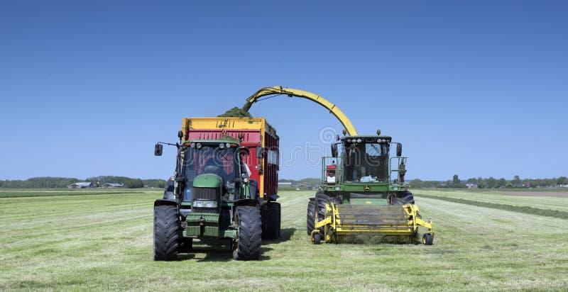 Ciągnik ładuje świeżo koszącej łąkowej trawy na słonecznym dniu w lecie pod bluw niebem fotografia royalty free