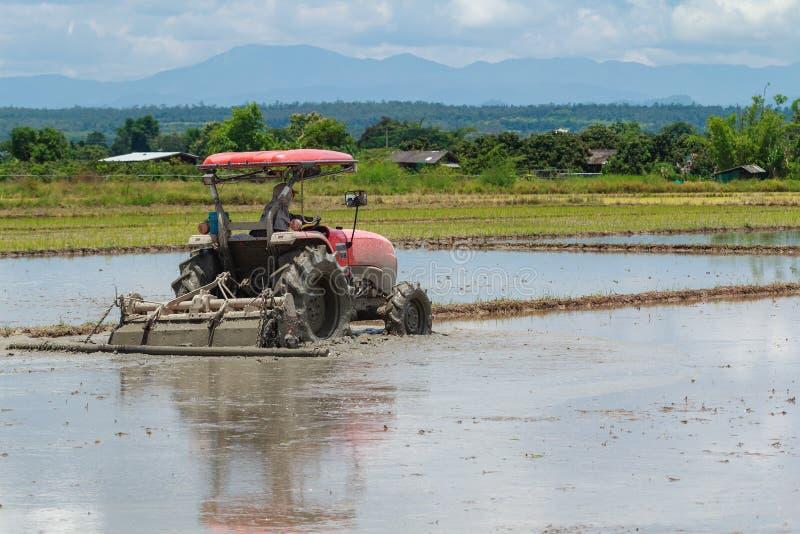 Ciągnik Orze w Rice polu zdjęcie stock