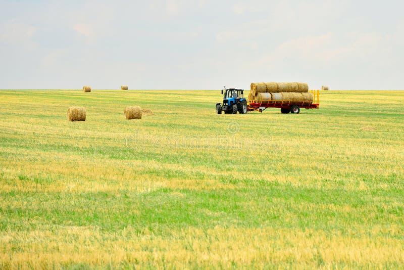 Ciągnik zbiera siano w snopach i bierze je z pola po kośby adra Agroindustrial przemysł obraz stock
