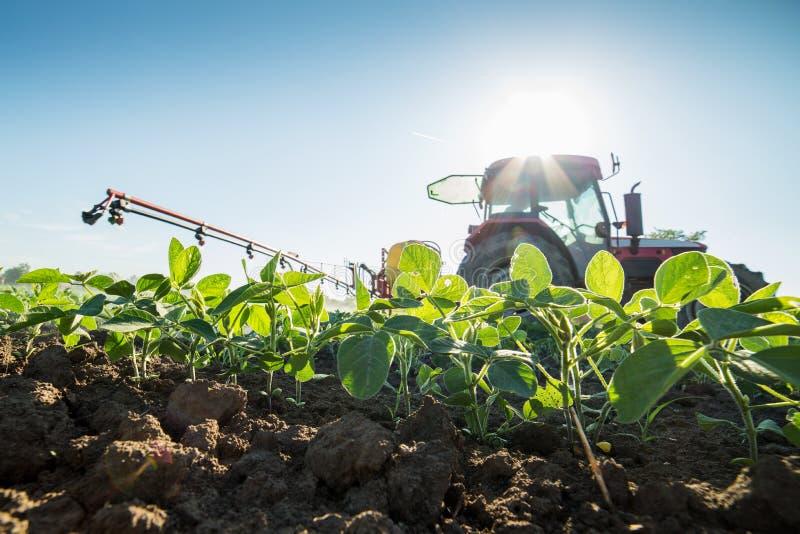 Ciągnikowe opryskiwanie soi uprawy z pestycydami i herbicydami obraz royalty free