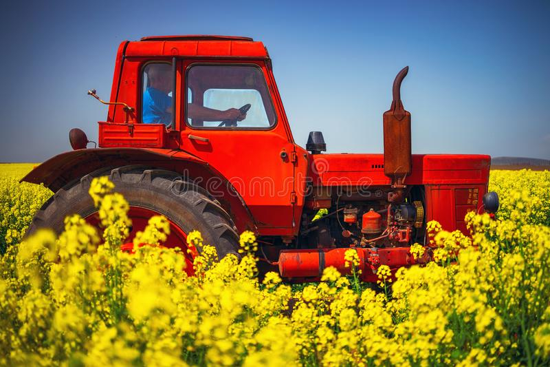 Ciągnikowy działanie na wschód słońca nad rapeseed polem, piękny wiosna dzień zdjęcia royalty free