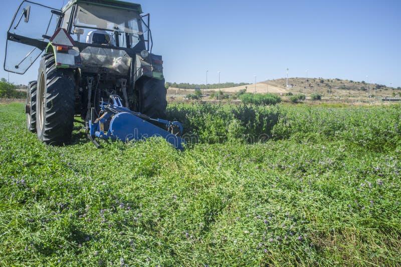 Ciągnikowy rozcięcie i swathing alfalfa zdjęcie stock