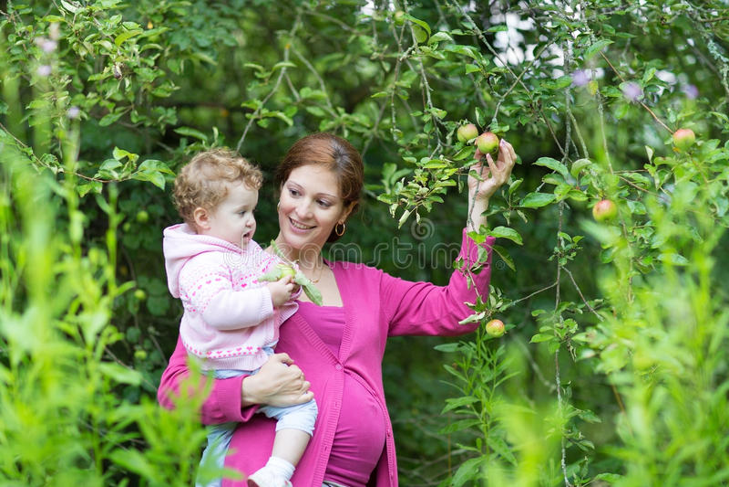 Ciężarni macierzyści zrywań jabłka z jej dziecko córką zdjęcie stock