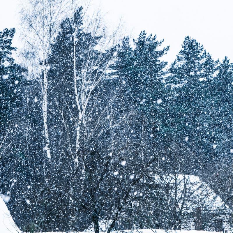 Ciężki opad śniegu w wiosce przeciw tłu zima las obrazy royalty free