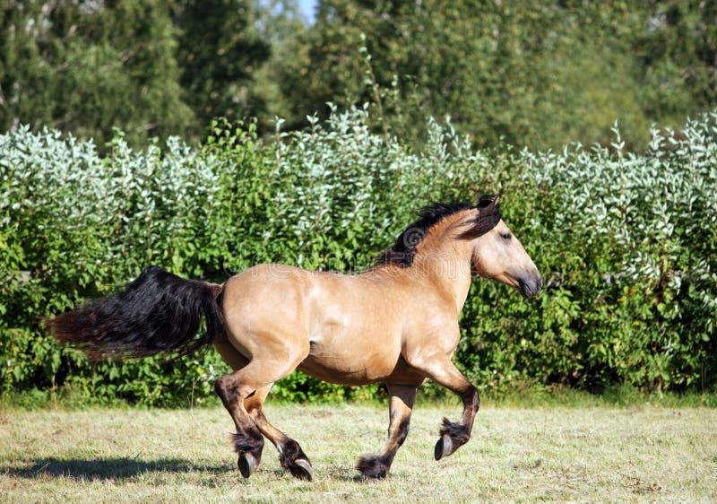 Ciężki szkicu koń przy gospodarstwo rolne wakacje w lecie obrazy royalty free