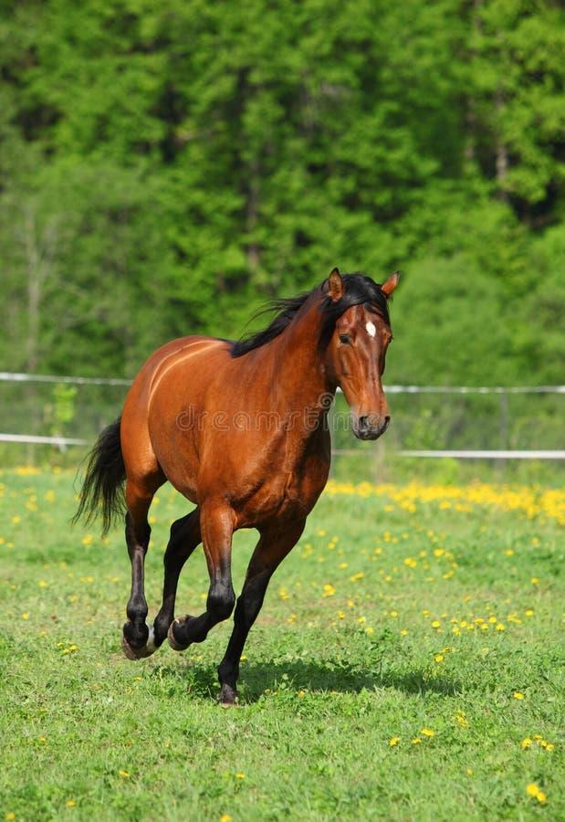Ciężki szkicu konia bieg cwał w polu obraz royalty free