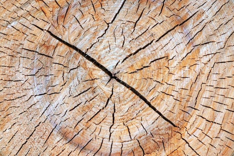 Cięcie drzewny bagażnik daje dobremu widokowi koncentryczny rok pierścionek obraz stock