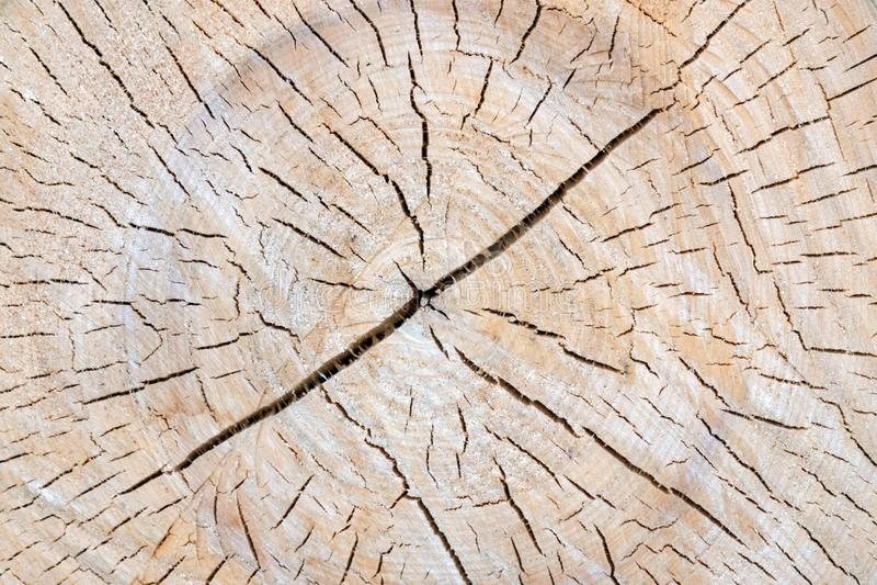 Cięcie drzewny bagażnik daje dobremu widokowi koncentryczny rok pierścionek zdjęcia stock