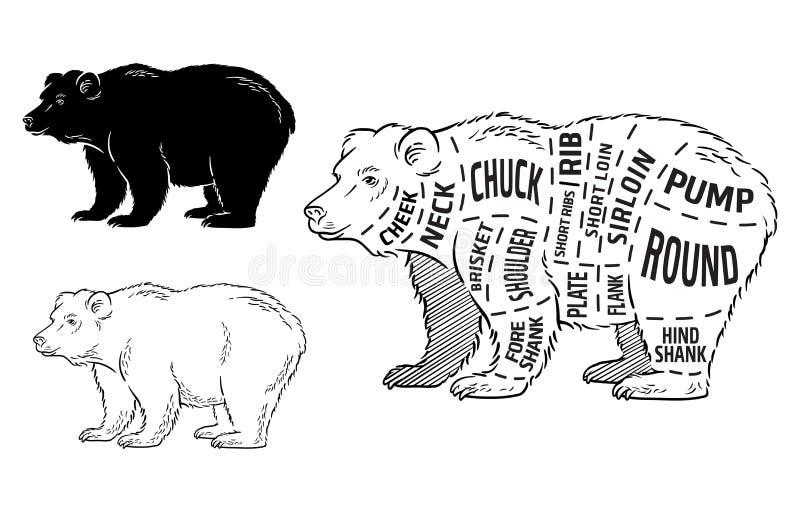 Cięcie niedźwiedzia set Plakatowy masarka diagram - niedźwiedź Rocznika typograficzny pociągany ręcznie ilustracja wektor