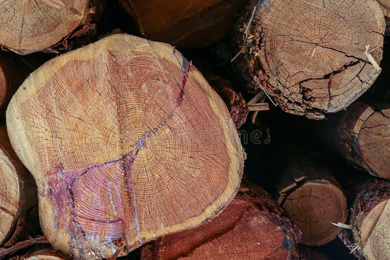 Cięcie puszek notuje sosna pękającego żywiców rocznych pierścionków ciężkiego drewno zamkniętego w górę tła drewnianego zdjęcie stock