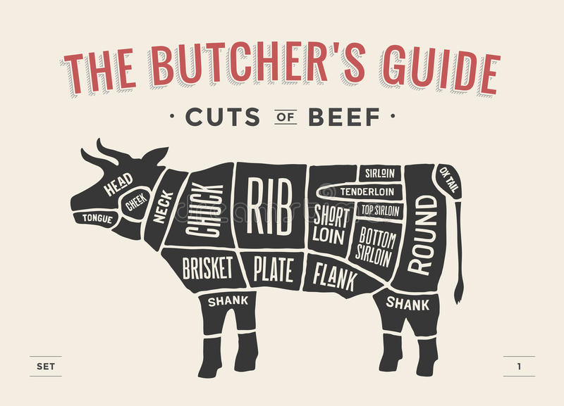Cięcie wołowina set Plakatowy masarka diagram i plan - krowa Rocznika typograficzny pociągany ręcznie również zwrócić corel ilust royalty ilustracja