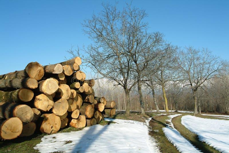 cięte śnieżni truns drzew zdjęcia royalty free