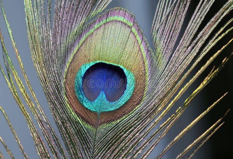 Ci?rrese encima del detalle de la pluma del pavo real fotos de archivo