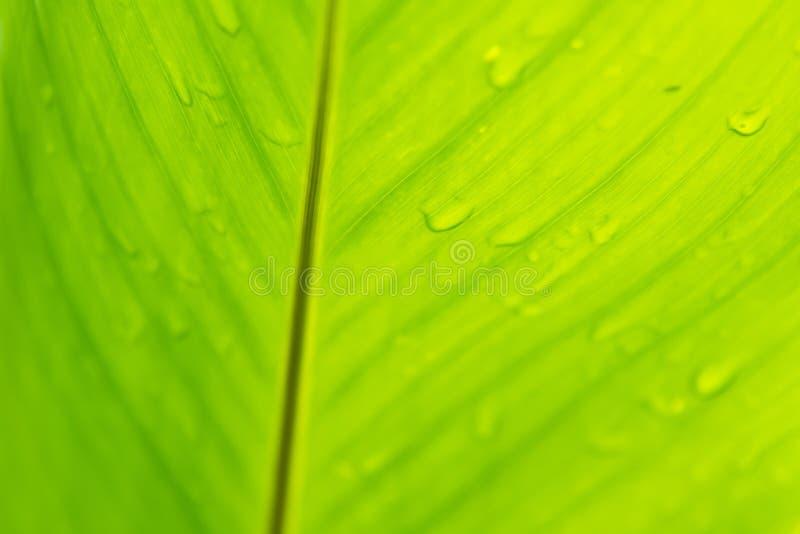 Ci?rrese para arriba de fondo verde de la naturaleza de la hoja imágenes de archivo libres de regalías