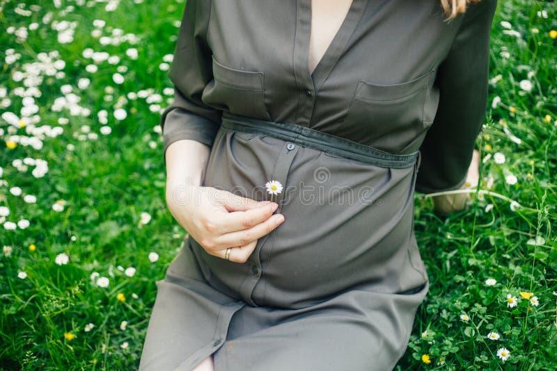 Ci?rrese para arriba del vientre de una mujer embarazada que sostiene una flor de la margarita en un parque del verano fotos de archivo
