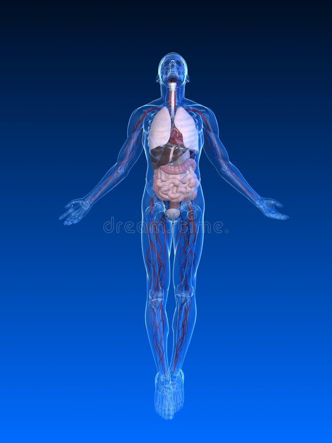 ciała samiec wydźwignięcie ilustracja wektor