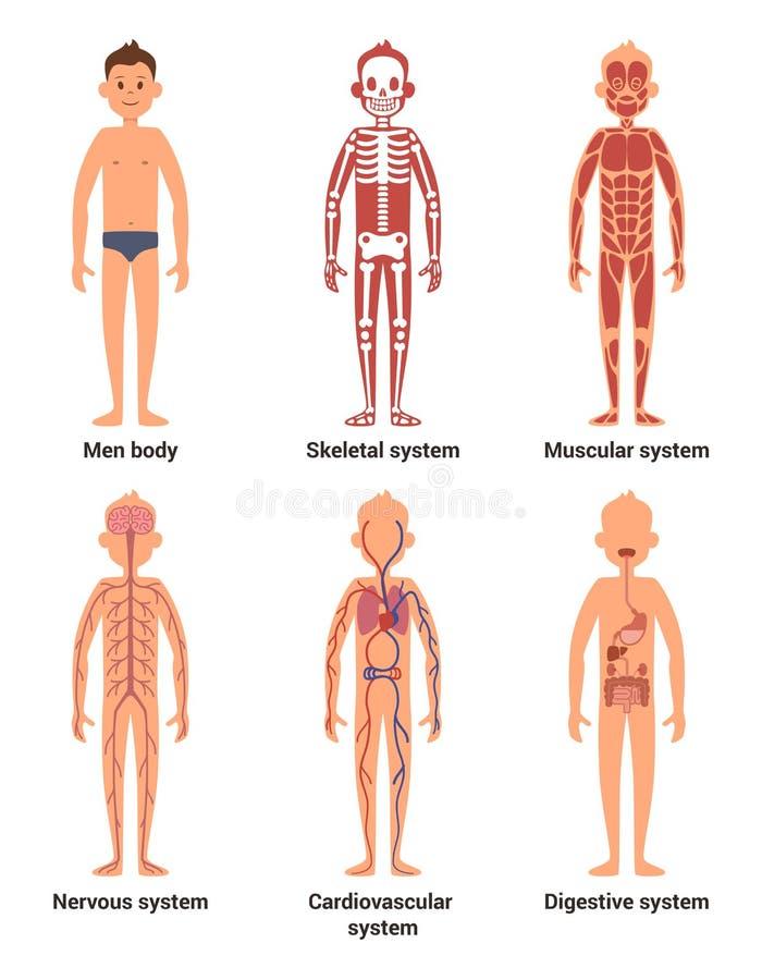 Ciało anatomia mężczyzna Nerwy, mięśniowi systemy, serce i inni organy, abstrakcjonistycznych tła błękitny guzika kolorów glansow ilustracja wektor