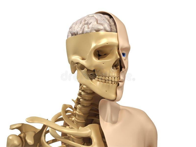 ciało istota ludzka ilustracja wektor