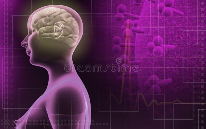ciało istota ludzka móżdżkowa żeńska royalty ilustracja