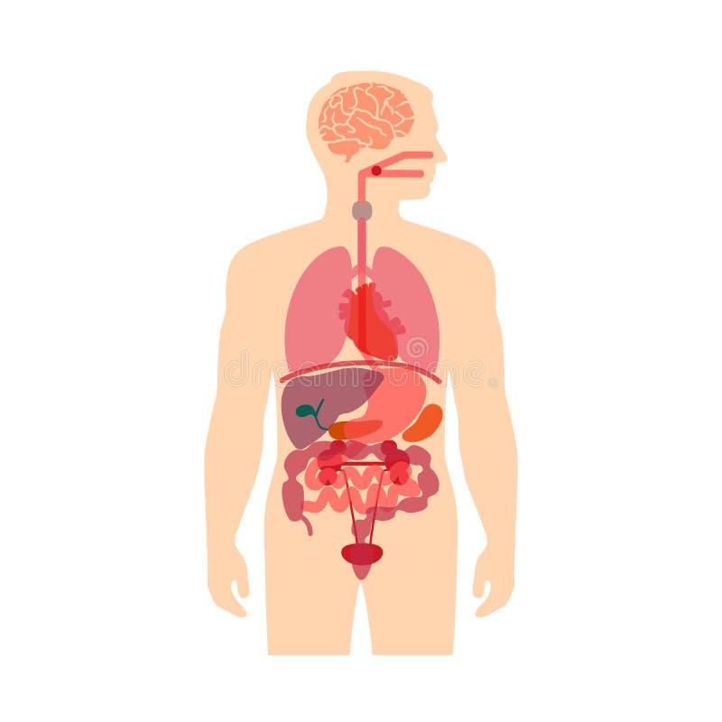 Ciało Ludzkie anatomia royalty ilustracja