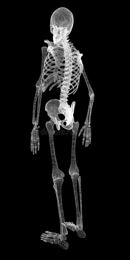 Ciało ludzkie, kościec zdjęcie stock